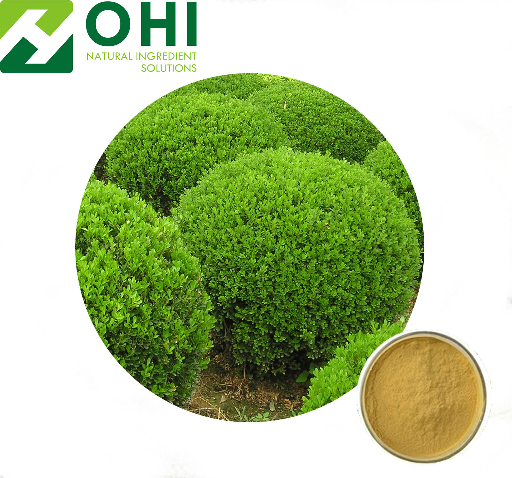 Boxwood Extract
