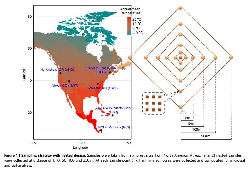 森林土壤微生物多样性调控机制