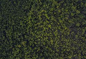 森林和土地应用