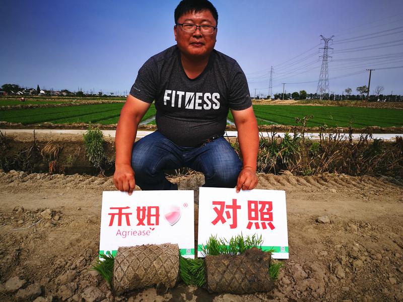 水稻拌种,今年流行禾姆®——禾姆®旋风在海安