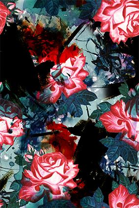 树叶红花植物花琼