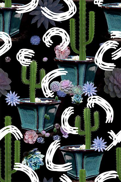 盆栽仙人掌花型