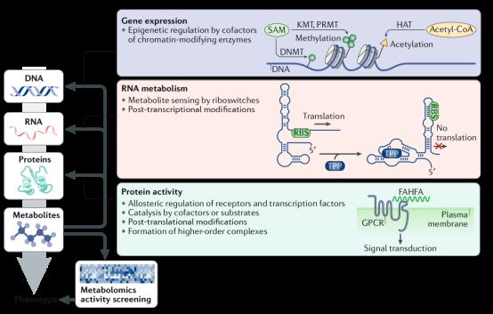 【Nature子刊】2月新文:利用活性代谢组学鉴定生物活性代谢物
