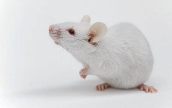 小鼠肠道微生物多样性+代谢组联合分析