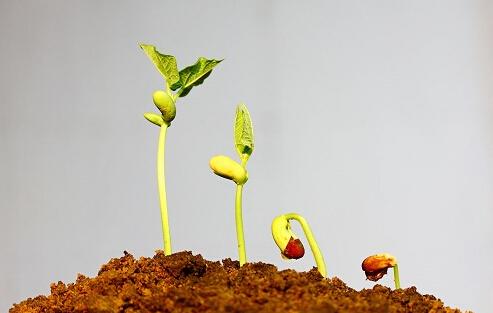 植物-根际微生物间的相互作用化学和代谢组学揭示与防御启动和诱导系统抗性相关信号的潜力