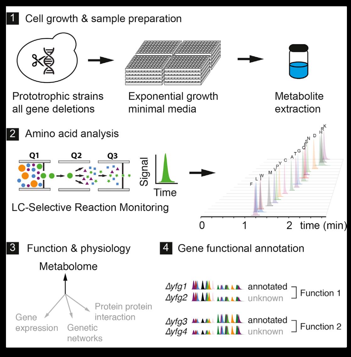 功能代谢组学阐述酵母生物合成调控