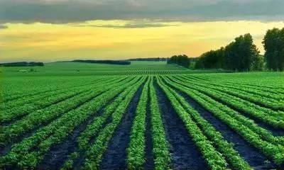 南京集思慧远客户文章《不同耕作方式下春小麦-豌豆轮作区细菌和真菌多样性评价》