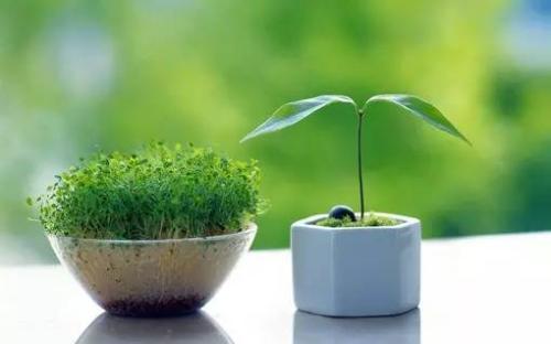 绿植----空间布置百搭神器