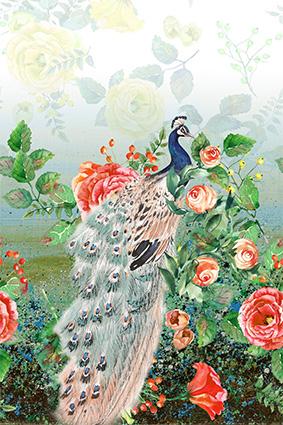 美丽绚丽孔雀花丛