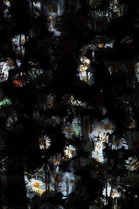 黑底魅影小太阳花朵